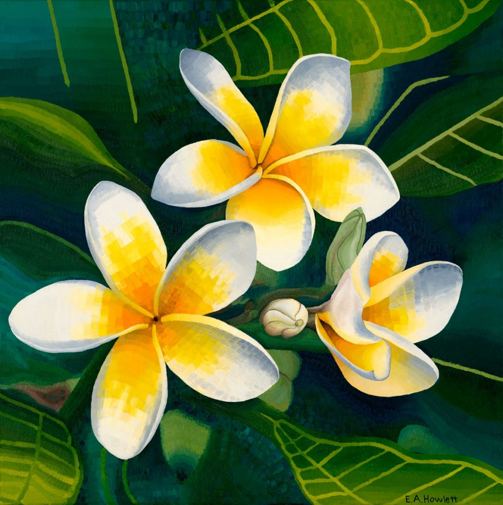 "Frangipani, oil on canvas, Elisabeth Howlett, 2009. Original Painting: 35 x 35"" / 90 x 90 cm."